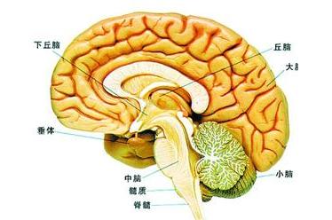 【疾病科普】唐都医院神经外科:颅底肿瘤都有哪些分类?
