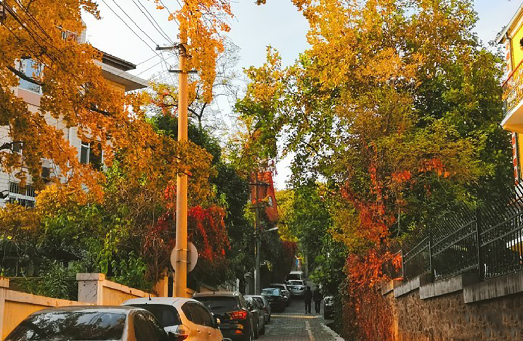在青岛不必常去八大关景区,更值得来小鱼山文化名人街,好玩免费