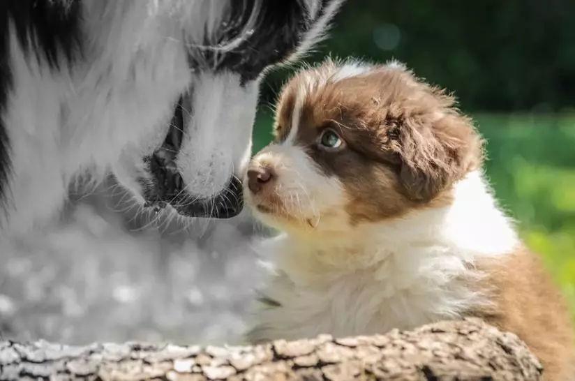 你是否相信轮回?宠物去世后,你还会再养宠物吗?