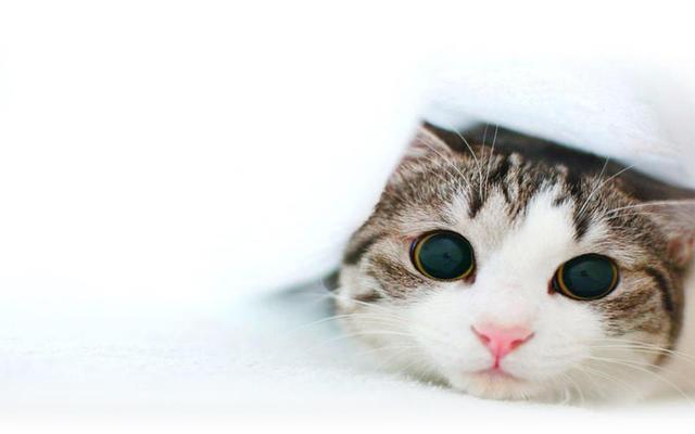 猫咪一个人在家会孤单吗图片