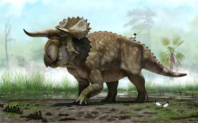 身长4.5米 美国犹他州发现新种恐龙,类似牛角的犄角和大鼻子