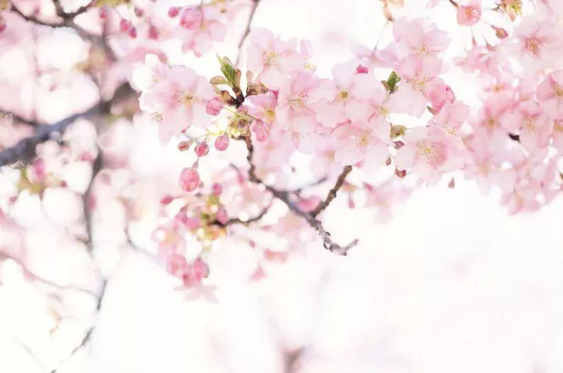 夜间赏樱时间表来啦!