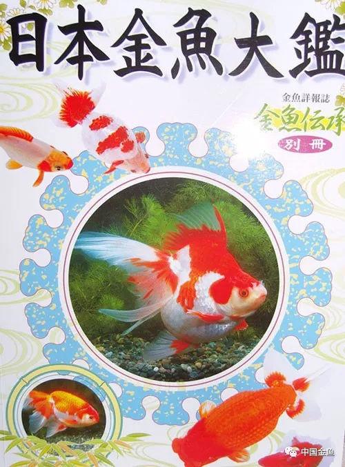 日本金鱼品种大鉴(图)
