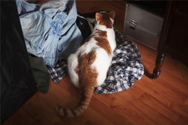 为什么人们会痴迷于养猫?不光是无法抗拒的可爱,更多的还是陪伴