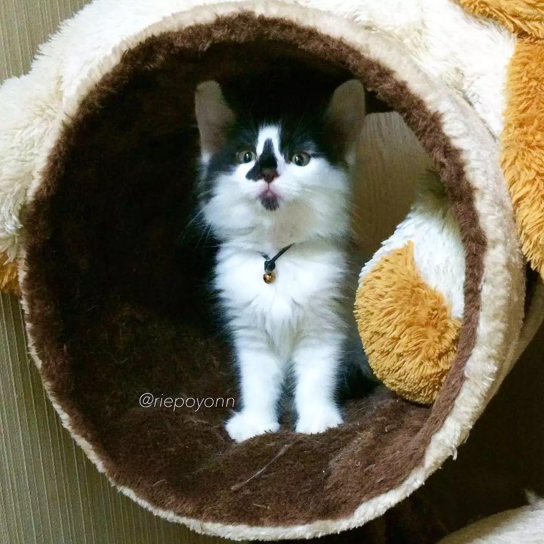 日本一貓主子帶大兩隻流浪貓後,三小隻的愛情狗血劇爆紅INS,網友:我要上車!