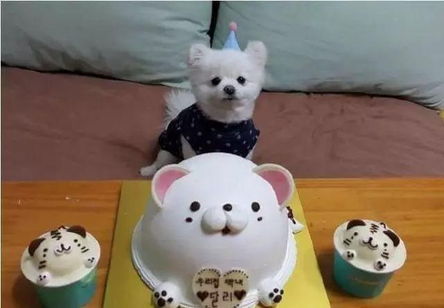 當狗狗收到生日蛋糕,臉上的表情絕了……