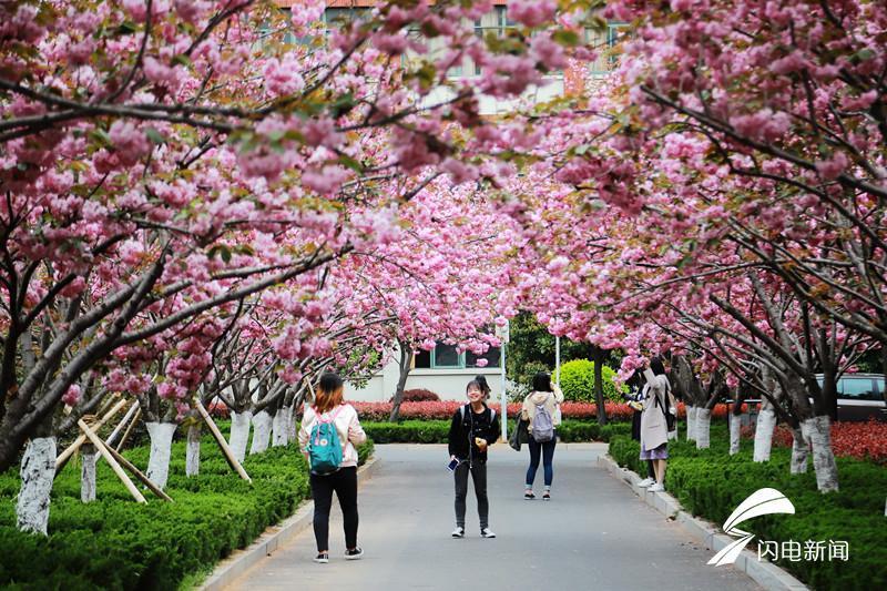 最美赏花季 走进青岛这所森林式大学