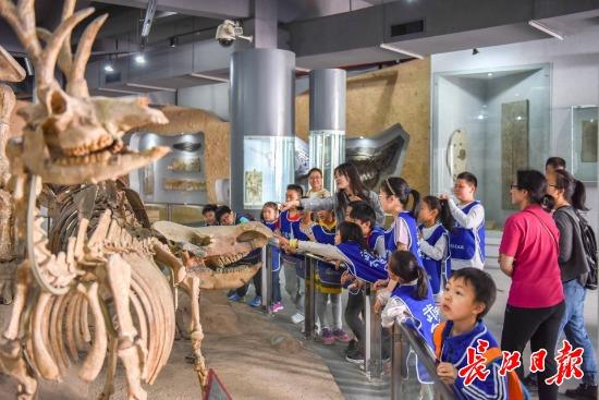 觀賞化石展品、挖掘野外化石 ,小學生們體驗當地質科考員