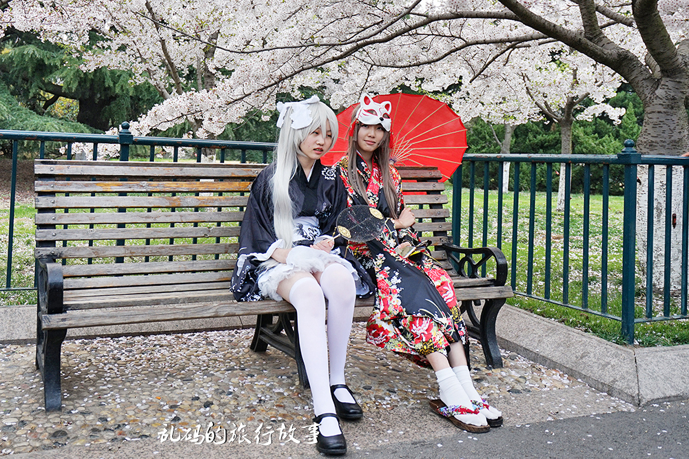 青岛开启最美樱花季 唯美花海不输武大 门票免费引众多市民观赏!