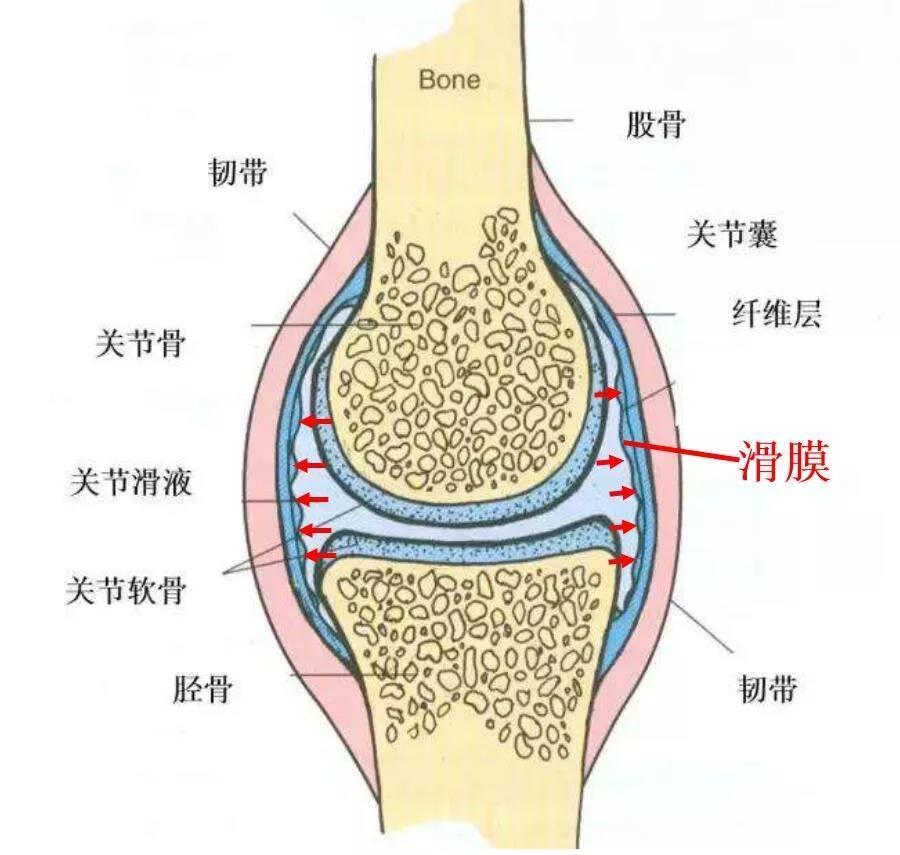 骨科大夫 | 跑步後腿疼、腳疼是怎麼回事?_膝關節