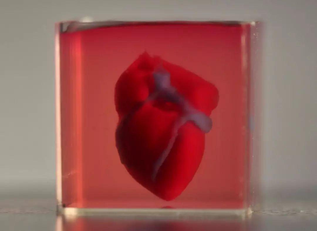 科学家打印了一颗人造心脏!只不过,它现在还有点小……