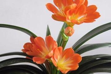 金花草味苦性质寒凉的中药材,具有清热解毒,利湿的功效