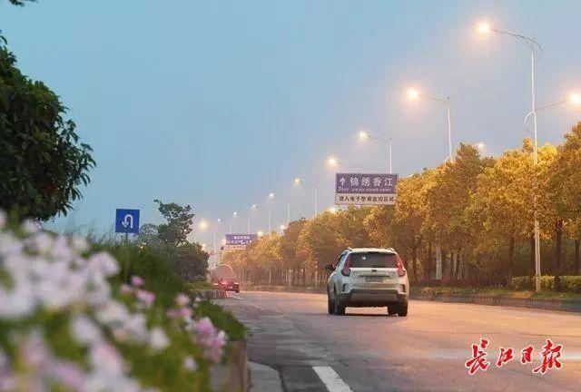 城建 | 高新大道绕城高速至左岭新城段路灯月底全线亮灯