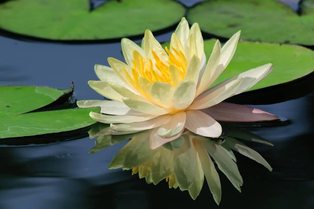 用一杯水的单纯,面对人世的复杂,愿你我都能活成洁白的莲花