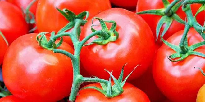 西红柿应该怎么吃?生吃?熟吃?空腹吃?减肥吃它有用吗?