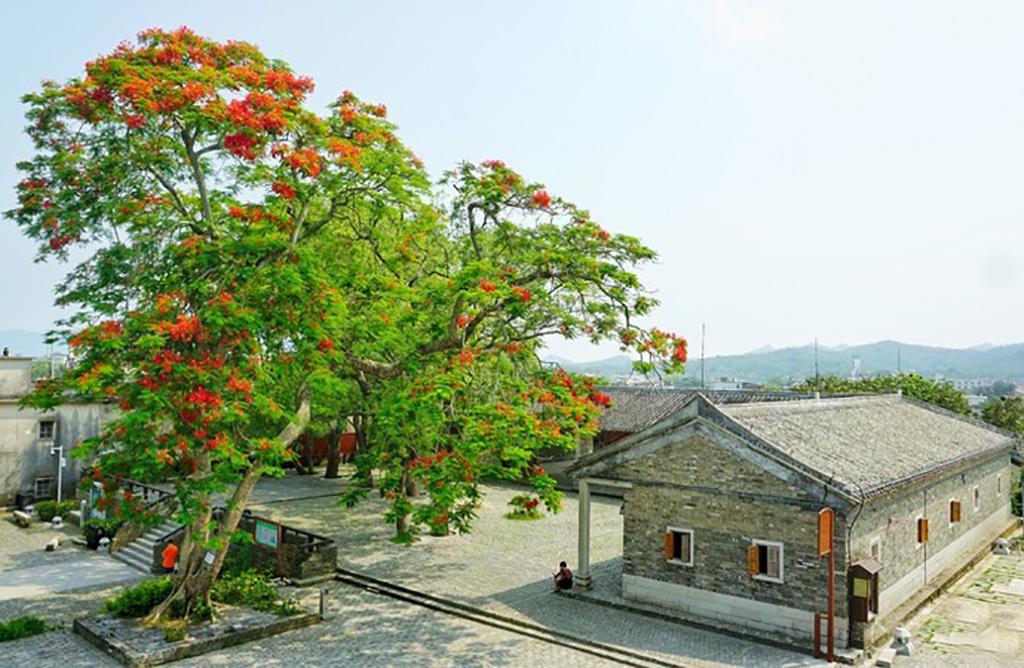 在深圳何必去世界之窗,更值得来大鹏所城,闲游拍照的免费好去处