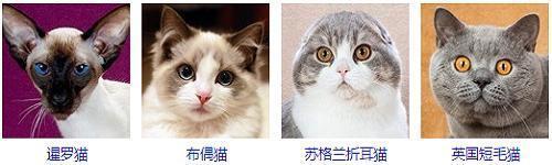 猫咪种类大全,能认出42种的屈指可数!