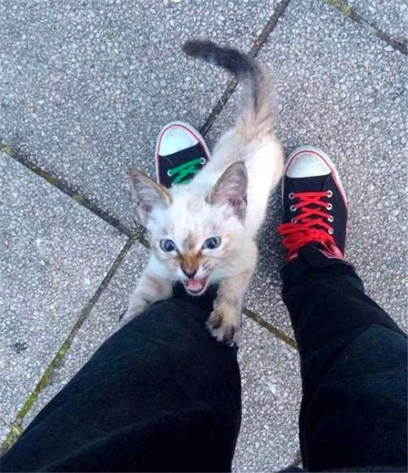 流浪猫太精明还会给自己找主人,结果被收养后成这德行!