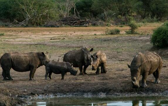 <b>斑马落难,犀牛前来救援,没想到遭到网友吐槽,这是为什么?</b>