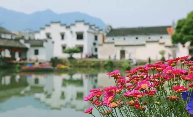 """500000盆鲜花将绽放大杭州这个古镇,还有亚洲最大花卉锦鲤""""鱼跃龙门""""!"""