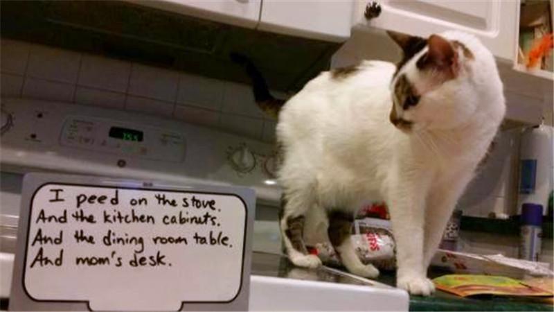 猫咪十大糗事被揭露,一件比一件劲爆,网友:以后还怎么混?