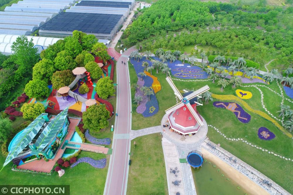 江苏南通:洲际绿博园花海景观惹人眼