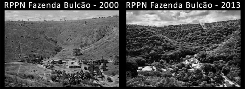 原创 巴西摄影大师夫妇植树造林20年,为荒山增绿,吸引野生动物归来