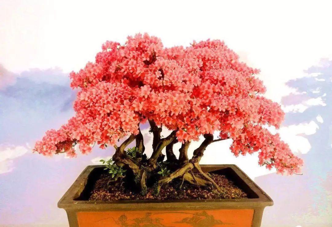 花在春天里,也在小朋友的绘画里,美景常在,待来年花开!
