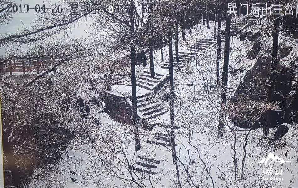 没看错!今天!4月26日!青岛崂山下雪了!视频+多图!网友:青岛第N次开春失败…