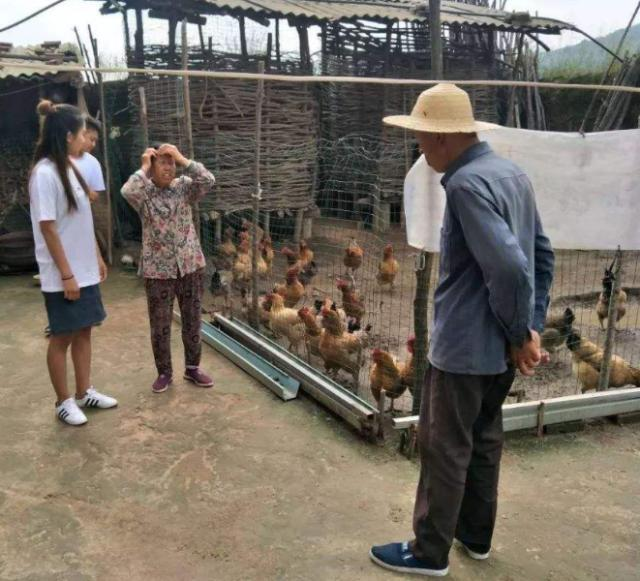 农民散养一年的土鸡,20元一斤卖不动,老农发愁:城里人咋不买?