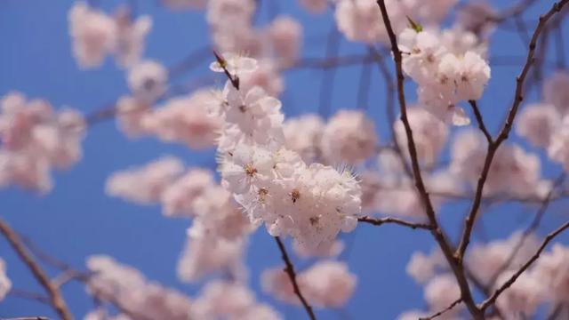 """长春""""醉美""""赏花季到了!哪里赏,赏什么花?进来瞧…"""