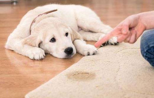 """健康饲养,从馋不腻狗粮开始,想了解更多的饲养知识,请关注""""馋不腻狗粮""""搜狐号"""