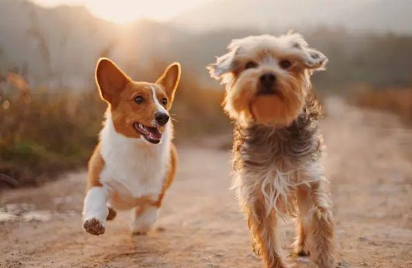 一个人养七只狗是什么样一种体验?
