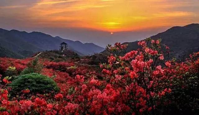 北宫森林公园门票_西安周边五月赏花攻略 中国十大名花之一秦岭盛开_杜鹃