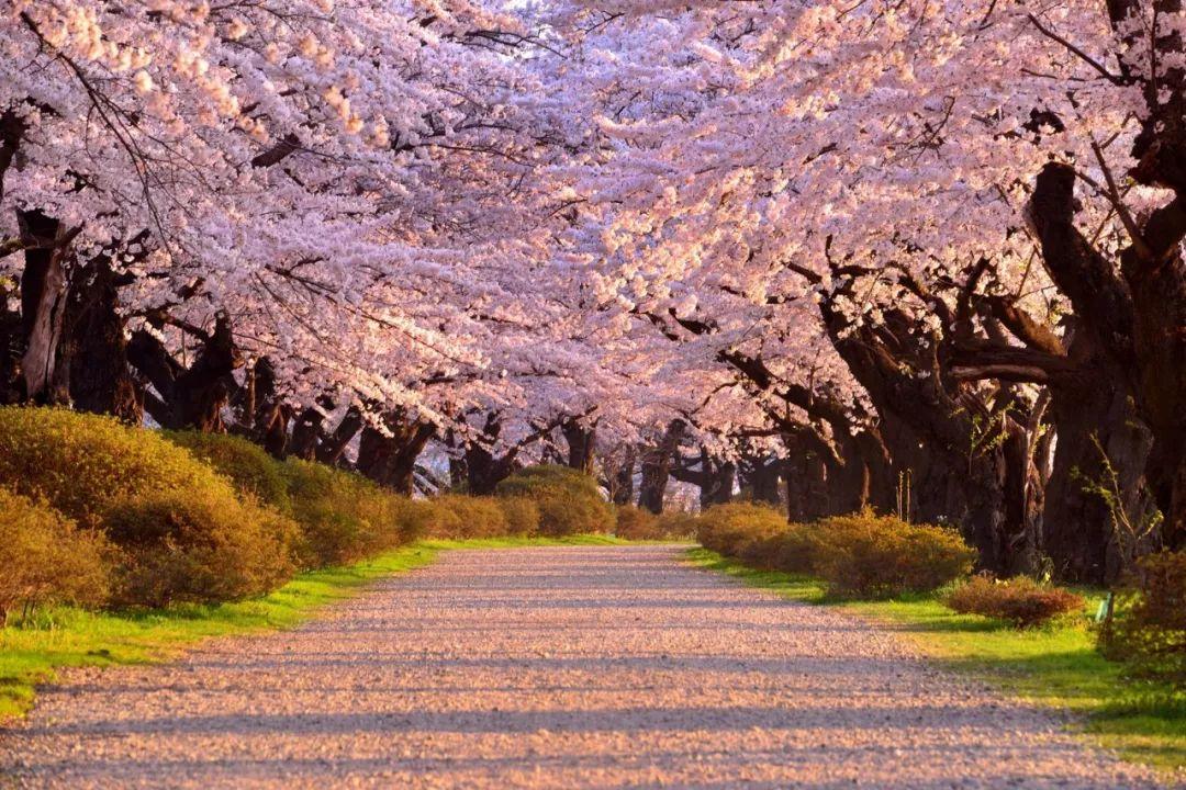 在四季都能感受到纯粹之美的东北岩手,这里的春天才刚刚开始!