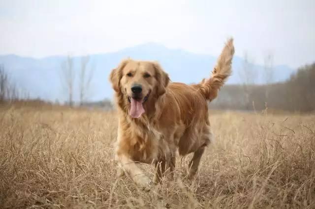 普贝斯:春季狗狗食欲不好怎么办?