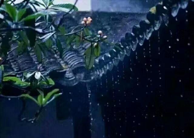 那些比伞更高的雨声  去了远方