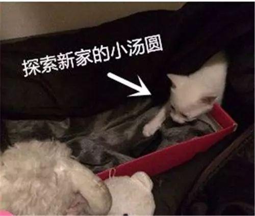 自从家里来了这磨人的小妖精,原本讨厌猫的爸爸彻底沦陷了!