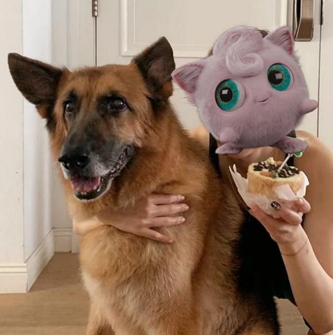 郑秀文晒许志安的宠物狗,确定已经和他同居,彻底原谅