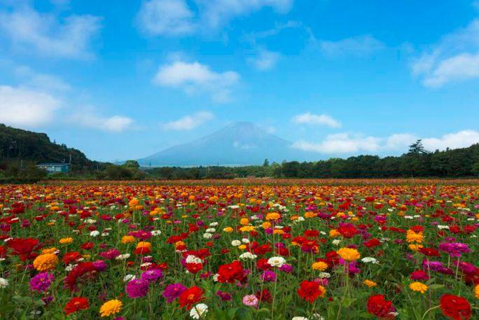 去日本,这10处绝美花田不了解一下就亏大了!