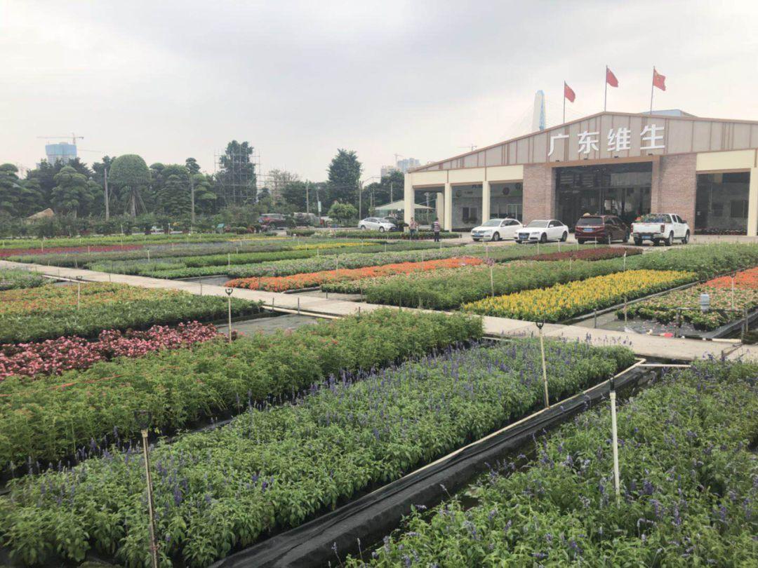Hi起来!快来佛山陈村花卉世界展览中心,让我们一起大饱口福