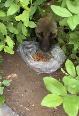 忻州市和平广场遛狗群爱心人救治受伤流浪狗