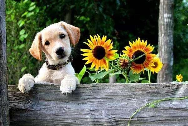 狗狗不听话怎么办,在家训练狗狗的5个方法