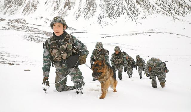 普贝斯带你了解军犬不为人知的生活。
