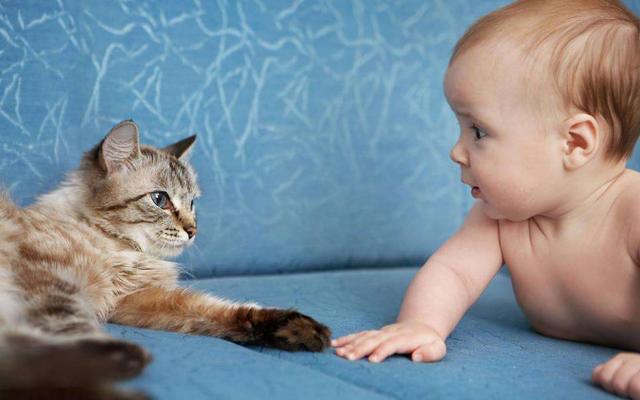 猫咪对婴儿的忍耐度那么高,是因为爱吗?
