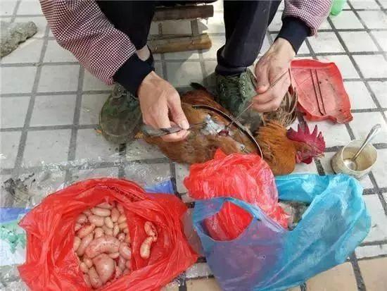 龙川农村这种东西小时候没有人要,现在要100多元1斤!