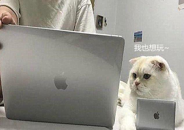 主人加班猫咪频频捣乱,无奈配置同款电脑,猫:这键盘我还怎么跪