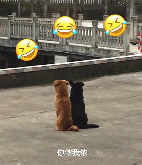 两只狗街头秀恩爱,女子掏出手机拍照,下一秒当没事发生