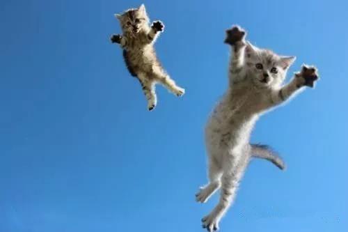 猫从飞机上跳下来也摔不死吗?
