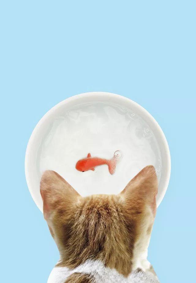英国工作室SUCK UK为宠物猫设计了一款名为Goldfish pet bowl的水碗